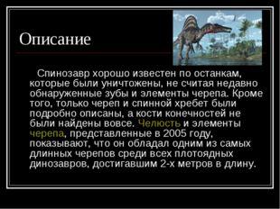 Описание Спинозавр хорошо известен по останкам, которые были уничтожены, не с