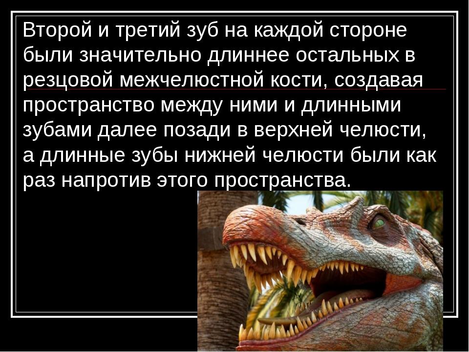 Второй и третий зуб на каждой стороне были значительно длиннее остальных в р...