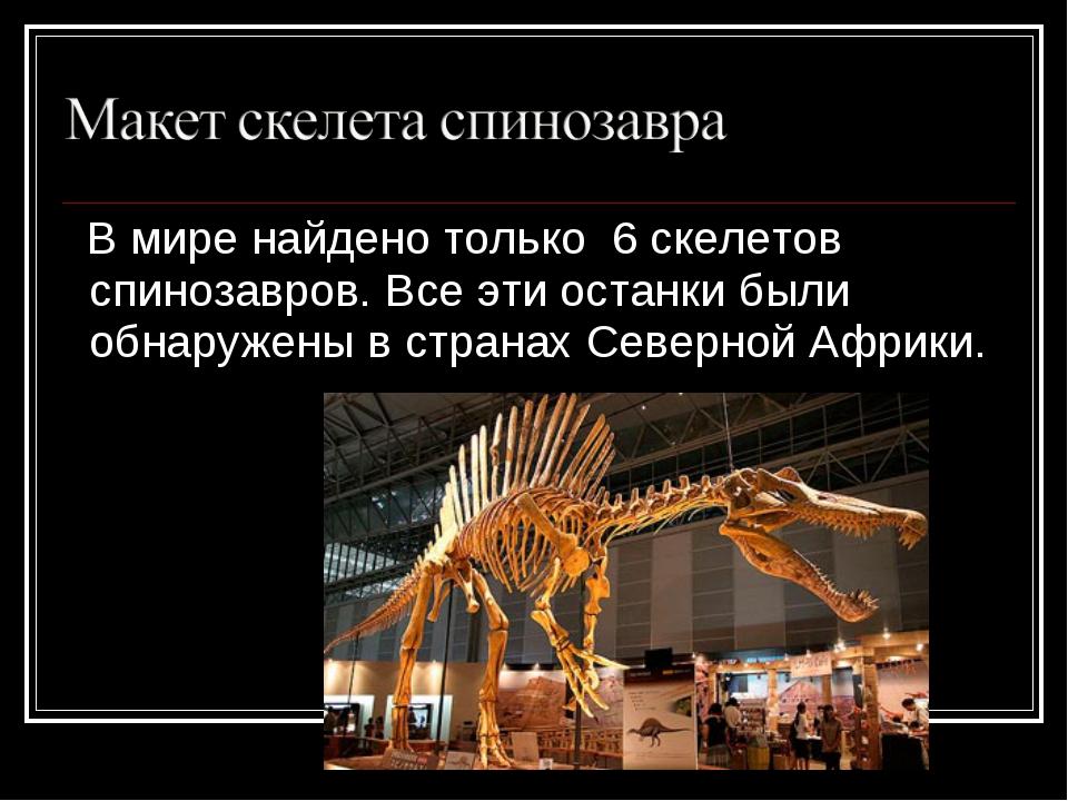 В мире найдено только 6 скелетов спинозавров. Все эти останки были обнаружен...