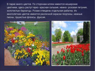 В парке много цветов. По сторонам аллеи имеются неширокие цветники, здесь рас
