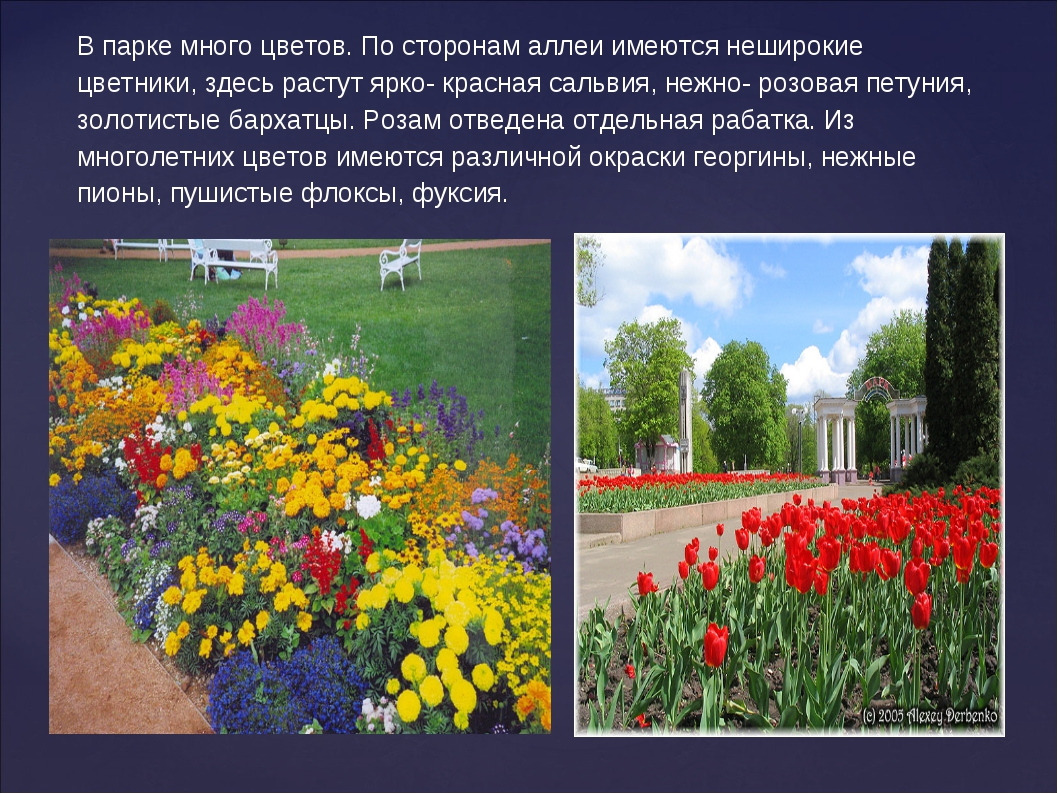 В парке много цветов. По сторонам аллеи имеются неширокие цветники, здесь рас...