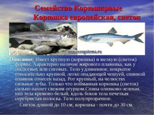 Семейство Корюшкрвые  Корюшка европейская, снеток Описание: Имеет крупную (