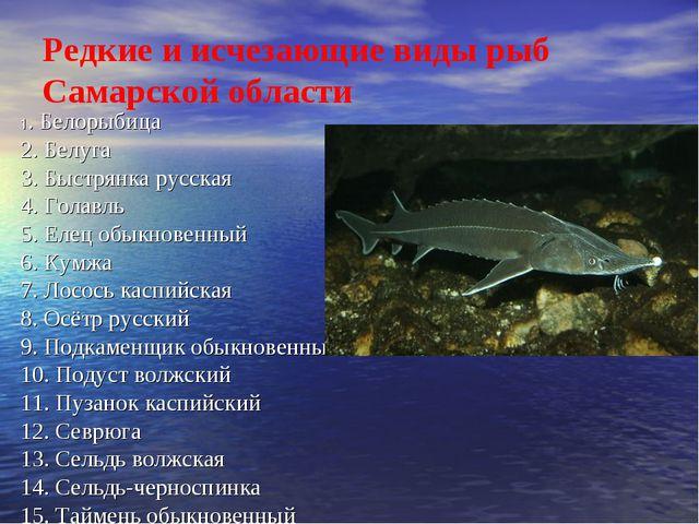Редкие и исчезающие виды рыб Самарской области 1. Белорыбица 2....