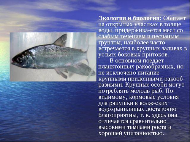 Экология и биология: Обитает на открытых участках в толще воды, придерживает...