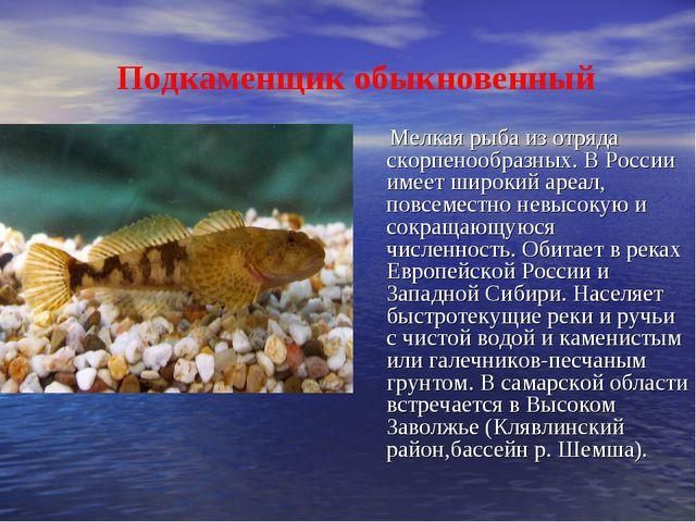 Подкаменщик обыкновенный Мелкая рыба из отряда скорпенообразных. В России им...