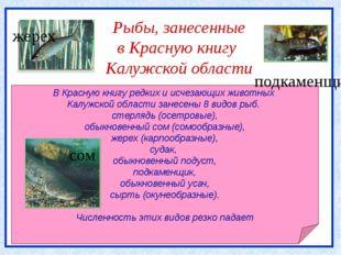Рыбы, занесенные в Красную книгу Калужской области В Красную книгу редких и