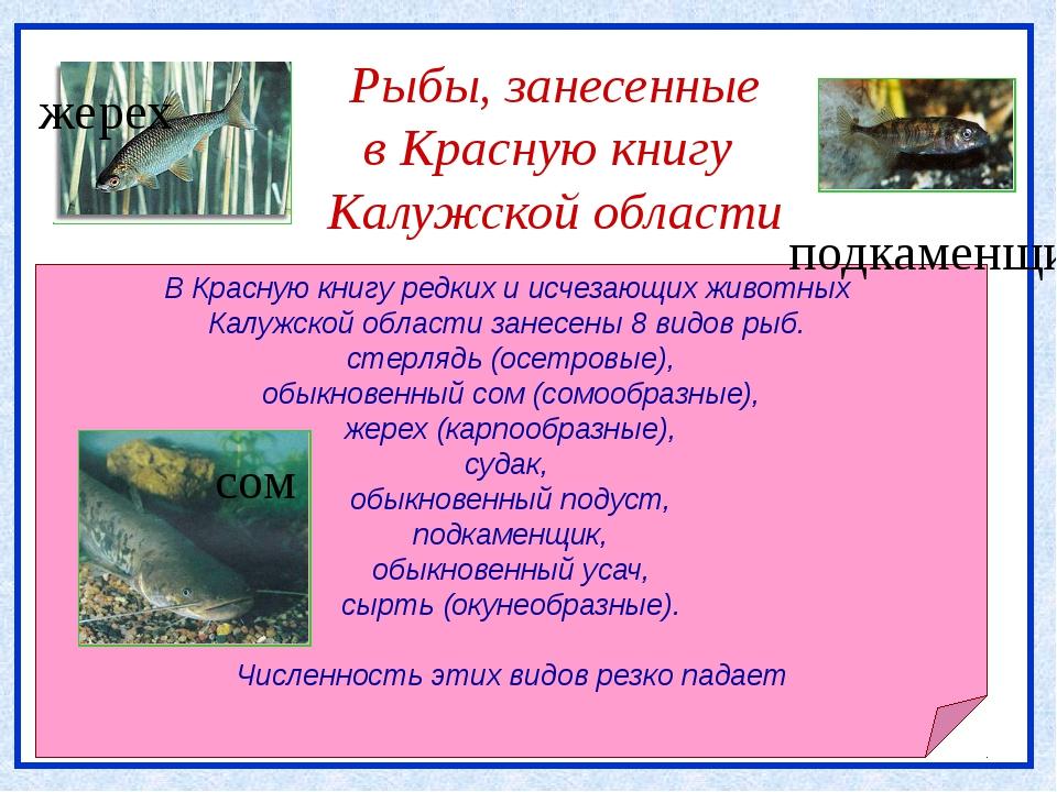 Рыбы, занесенные в Красную книгу Калужской области В Красную книгу редких и...