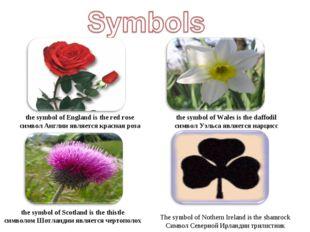 the symbol of England is the red rose символ Англии является красная роза th