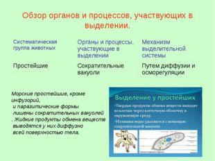Обзор органов и процессов, участвующих в выделении. Морские простейшие, кроме