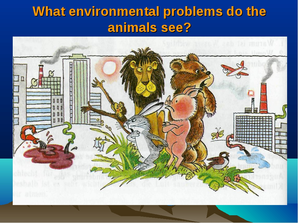 What environmental problems do the animals see?
