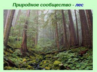 Природное сообщество - лес
