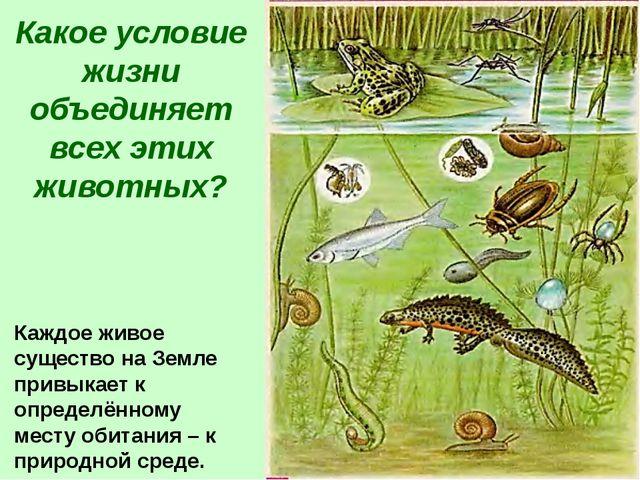 Какое условие жизни объединяет всех этих животных? Каждое живое существо на...