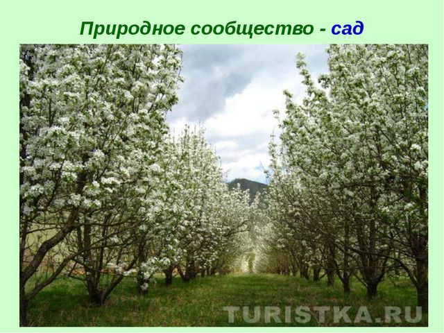 Природное сообщество - сад