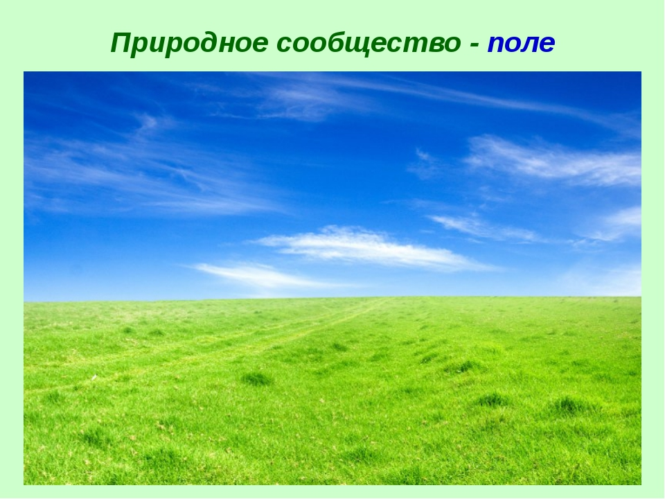 Природное сообщество - поле
