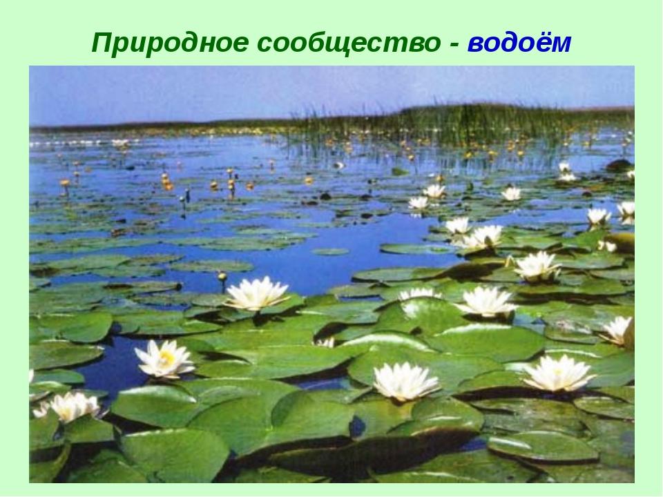 Природное сообщество - водоём