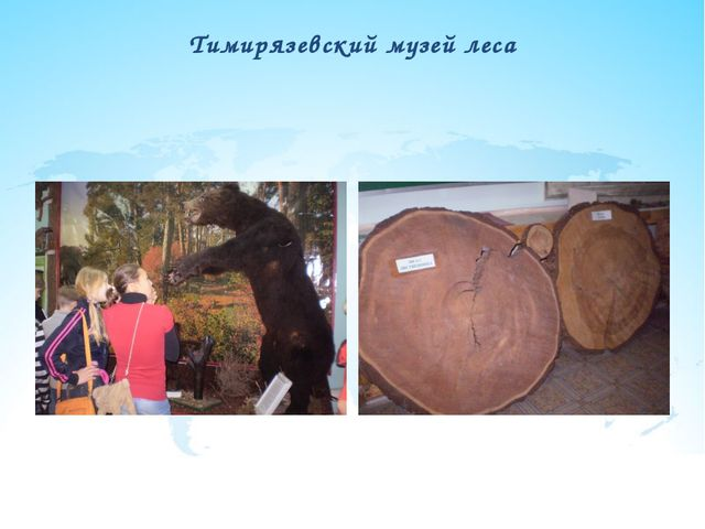 Тимирязевский музей леса