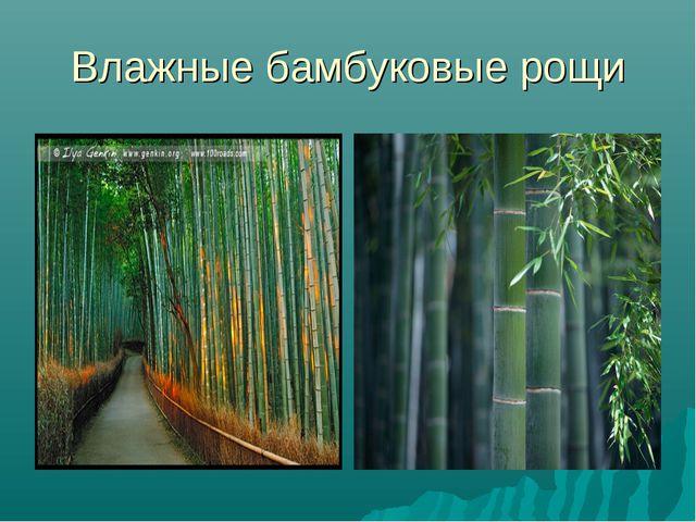 Влажные бамбуковые рощи