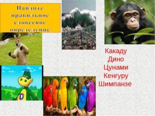 Какаду Дино Цунами Кенгуру Шимпанзе