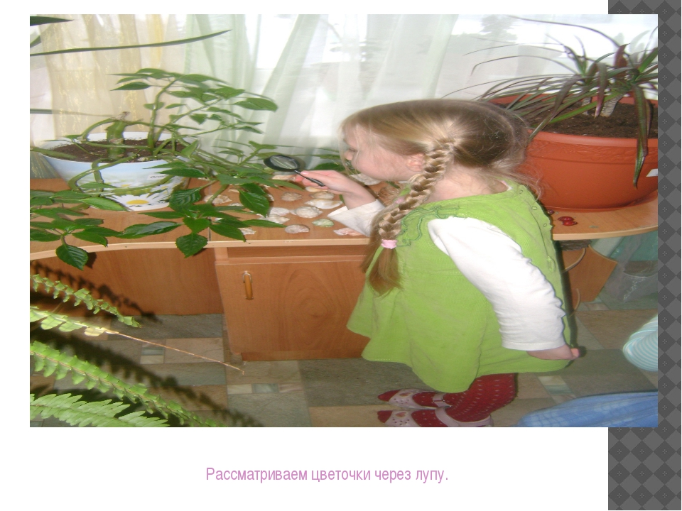 Рассматриваем цветочки через лупу.