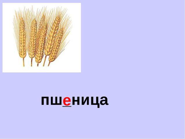 пш_ница е