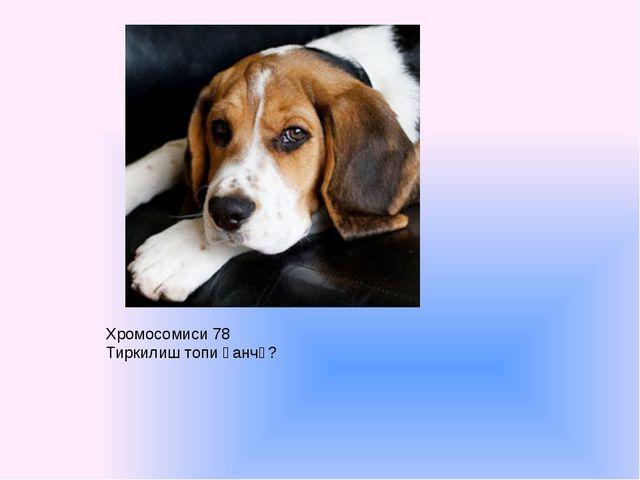 Хромосомиси 78 Тиркилиш топи қанчә?