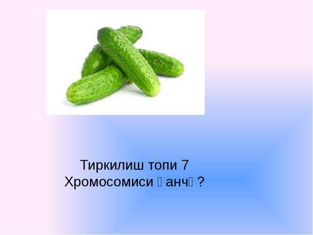 Тиркилиш топи 7 Хромосомиси қанчә?