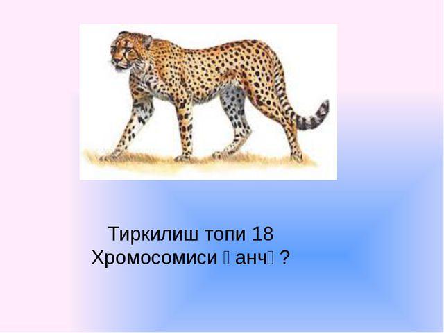 Тиркилиш топи 18 Хромосомиси қанчә?