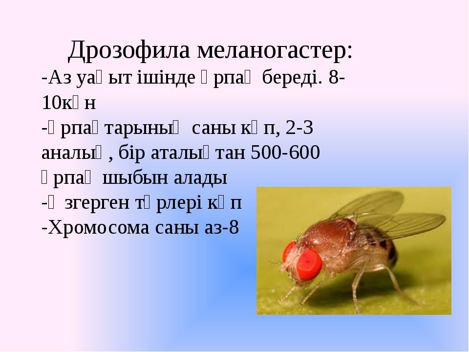Дрозофила меланогастер: -Аз уақыт ішінде ұрпақ береді. 8-10күн -Ұрпақтарының...