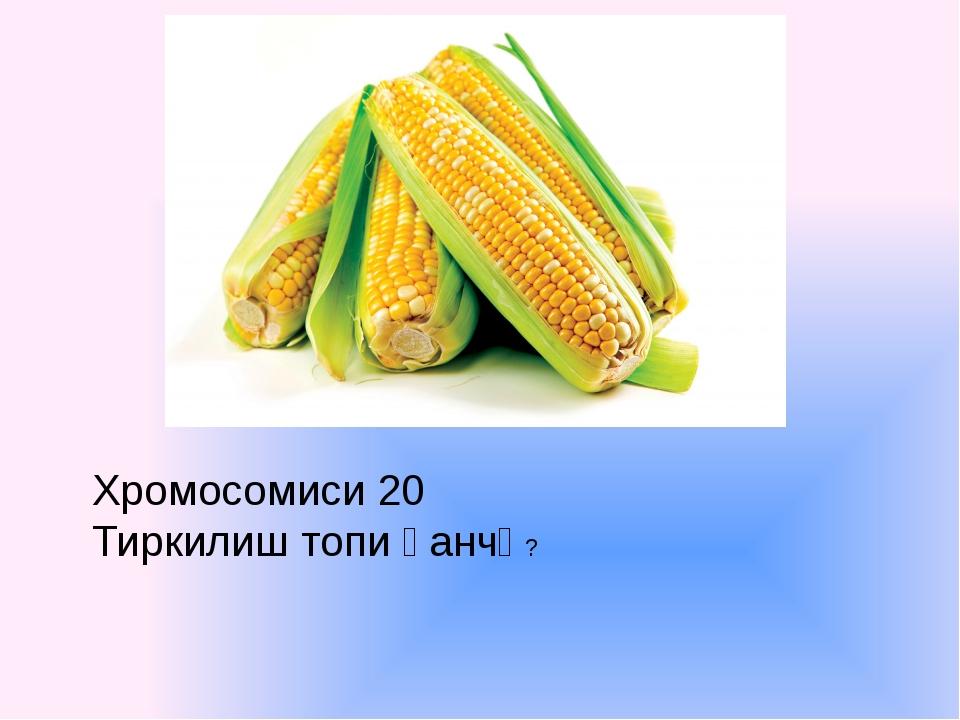 Хромосомиси 20 Тиркилиш топи қанчә?