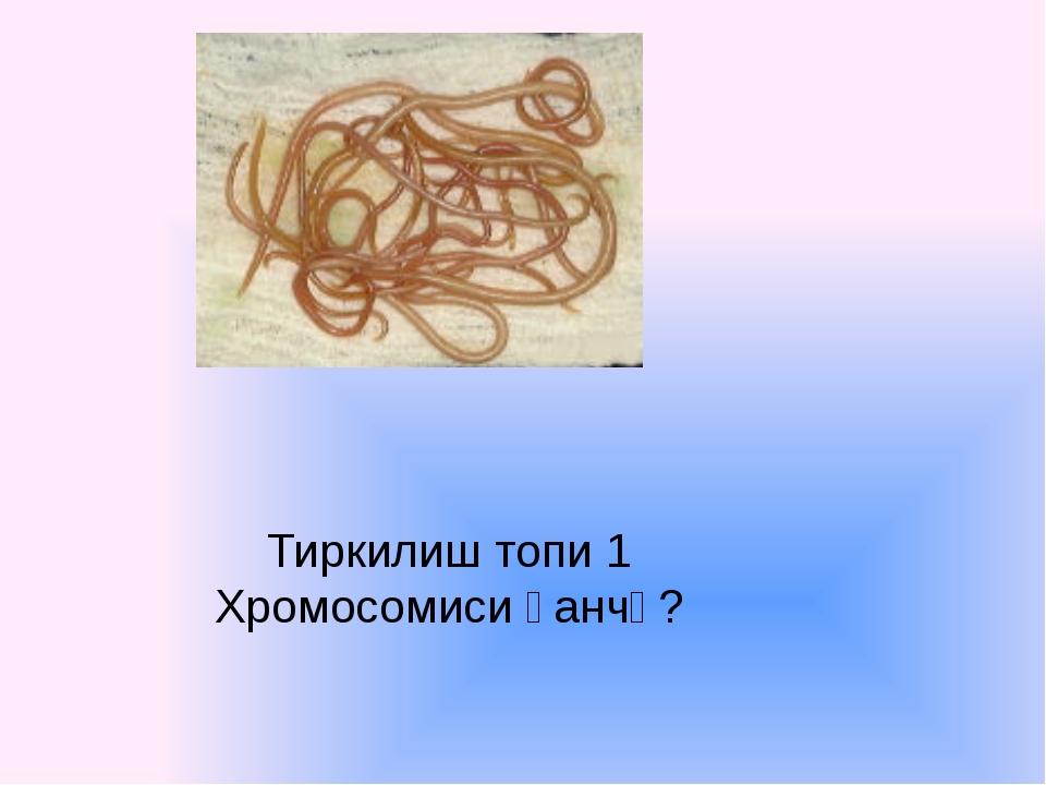 Тиркилиш топи 1 Хромосомиси қанчә?