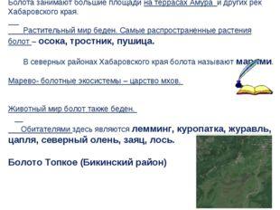 Болота занимают большие площади на террасах Амура и других рек Хабаровского