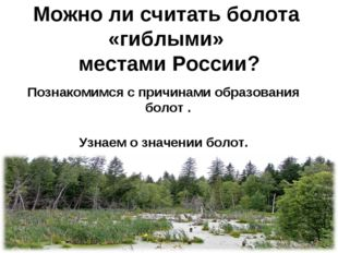 Можно ли считать болота «гиблыми» местами России? Познакомимся с причинами об