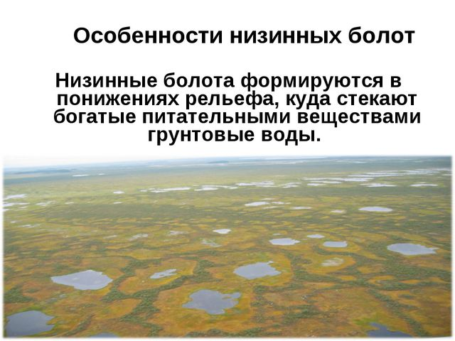 Особенности низинных болот Низинные болота формируются в понижениях рельеф...