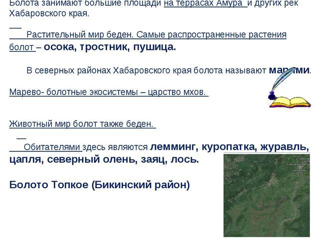 Болота занимают большие площади на террасах Амура и других рек Хабаровского...