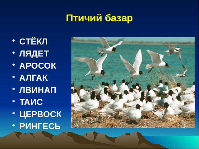 Птичий базар СТЁКЛ ЛЯДЕТ АРОСОК АЛГАК ЛВИНАП ТАИС ЦЕРВОСК РИНГЕСЬ