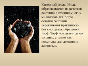 Каменный уголь. Уголь образовывается из остатков растений в течении многих ми