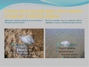 В конце августа когда море стало немного холодным, появились медузы Почему то