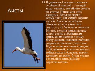 Издавна на Руси аист считался особенной птицей — птицей мира, счастья, семей