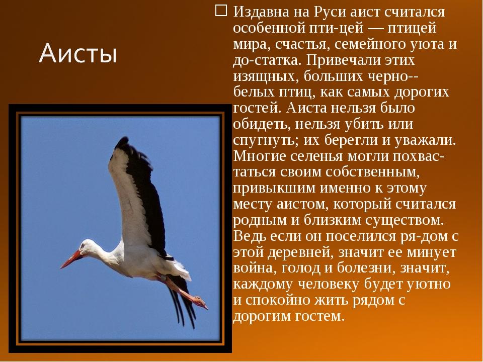 Издавна на Руси аист считался особенной птицей — птицей мира, счастья, семей...