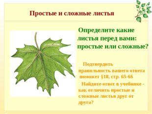 Простые и сложные листья Определите какие листья перед вами: простые или слож