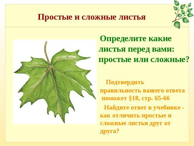 Простые и сложные листья Определите какие листья перед вами: простые или слож...