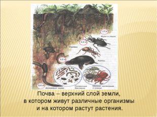 Почва – верхний слой земли, в котором живут различные организмы и на котором