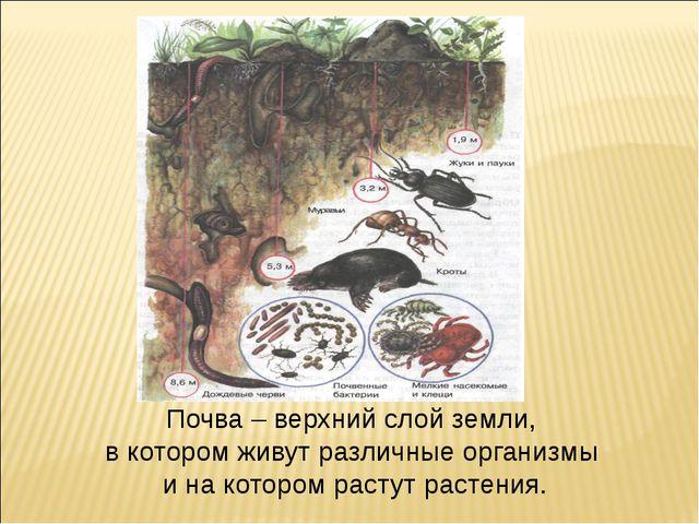 Почва – верхний слой земли, в котором живут различные организмы и на котором...
