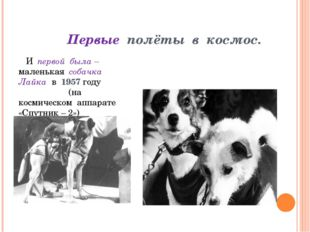 Первые полёты в космос. И первой была – маленькая собачка Лайка в 1957 году