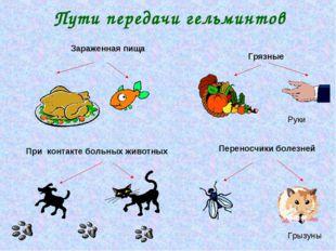 Пути передачи гельминтов Грязные При контакте больных животных Зараженная пищ
