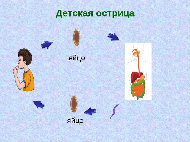 Детская острица яйцо яйцо