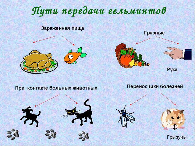 Пути передачи гельминтов Грязные При контакте больных животных Зараженная пищ...