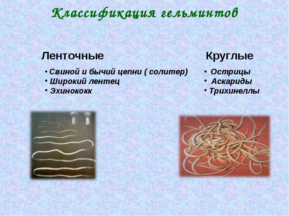 Классификация гельминтов Ленточные Свиной и бычий цепни ( солитер) Широкий ле...