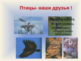 Птицы- наши друзья !