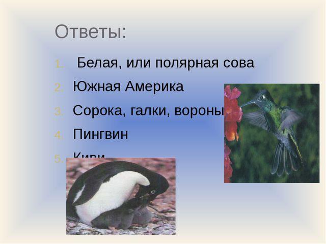 Ответы: Белая, или полярная сова Южная Америка Сорока, галки, вороны Пингвин...